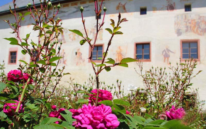 Landschloss_Parz_Renaissance-Garten_Historische_Rosen_Web_02