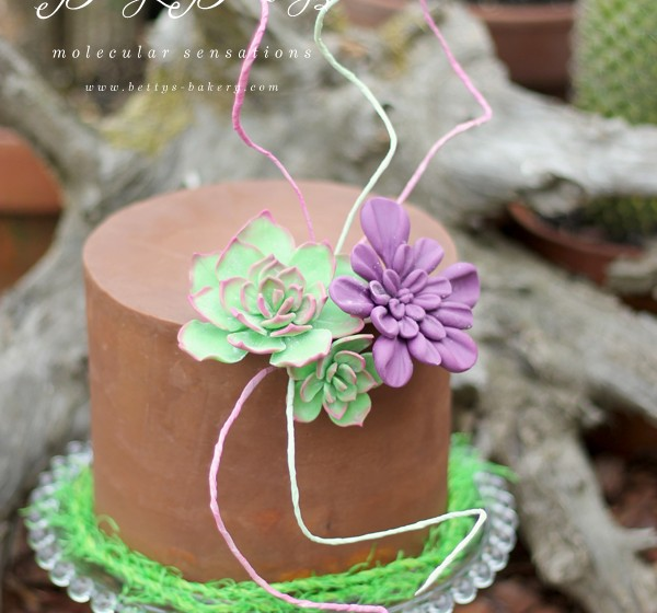succulent cake klein WM weiss