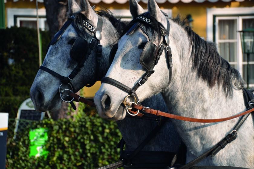 Max und Morits Köpfe Pferde Hochzeit (2)