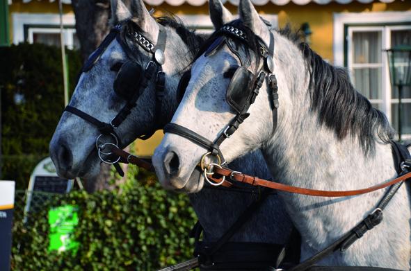 Max und Morits Köpfe Pferde Hochzeit click