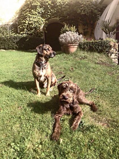 Bruno und Carlo im Garten