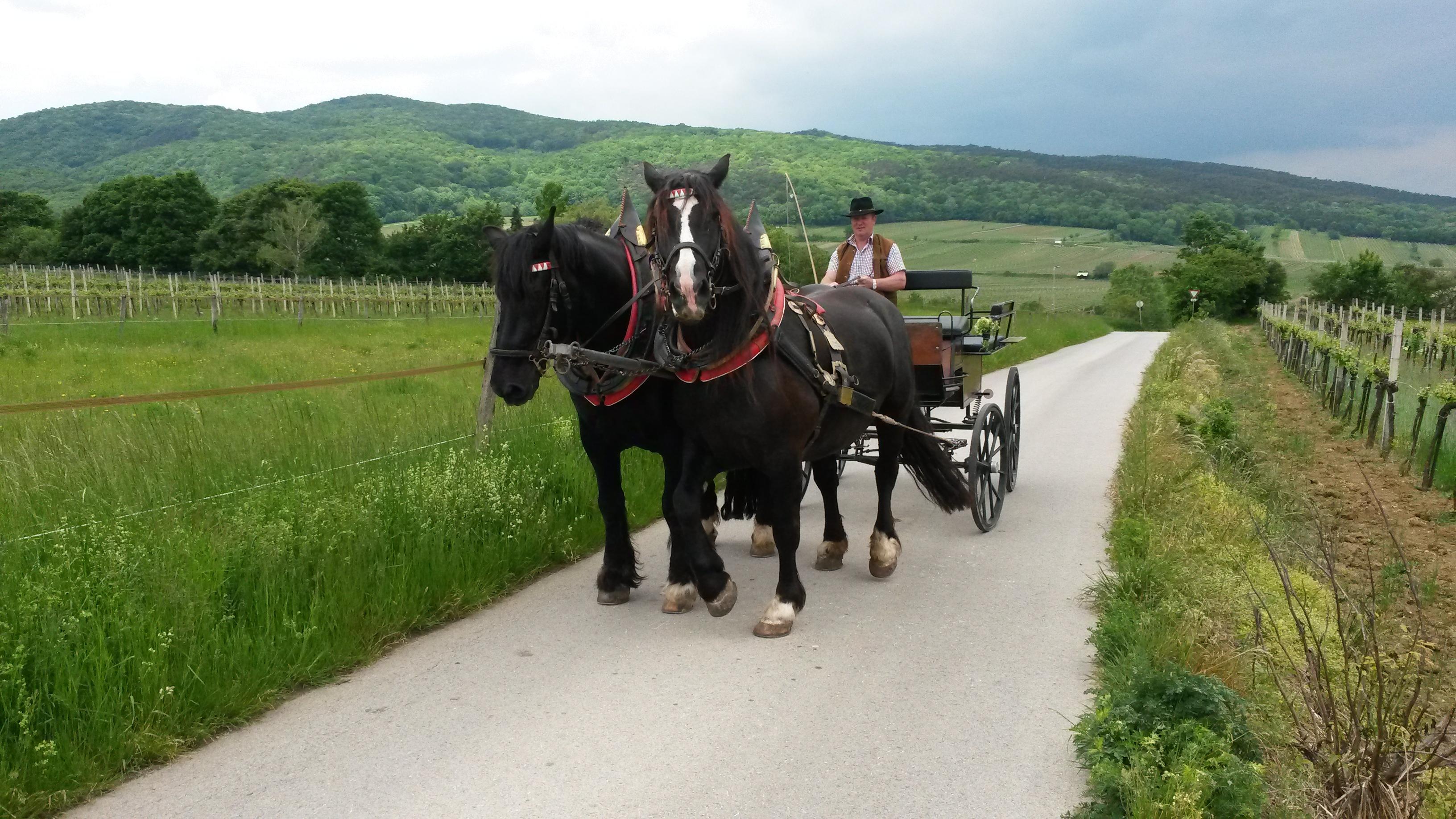 Heuriger Distl – Kutschenfahrten