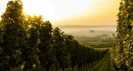 Hochzeit auf einem Weingut in Niederösterreich