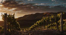 Hochzeit auf einem Weingut in der Steiermark