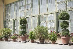 orangerie-schlosspark-eisenstadt_hochzeitslocation_sarah_bel_photography_00002