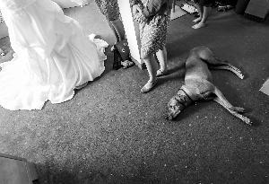 schlo-kremsegg_hochzeitslocation_weddingreport_00002