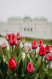 schloss-belvedere_hochzeitslocation_ivory_rose_photography_20190513090555339997